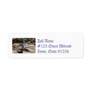 Dama Gazelle Return Address Label