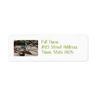 Dama Gazelle Custom Return Address Label