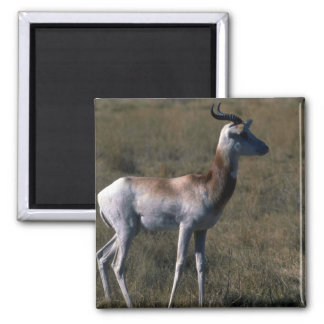 Dama Gazelle Fridge Magnet