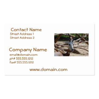 Dama Gazelle Pack Of Standard Business Cards