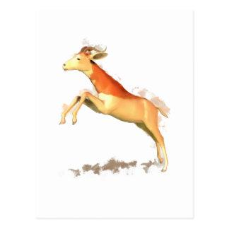 Dama Gazelle Postcard