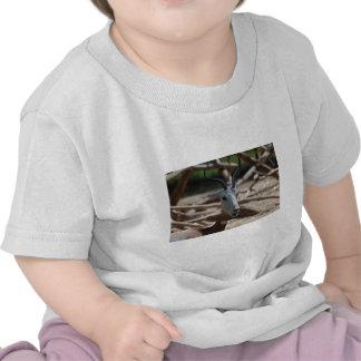 Dama Gazelle Shirts