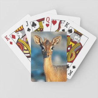 Damara Dik-Dik, Etosha National Park, Namibia Playing Cards