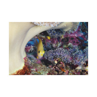 Damselfish Photo Canvas