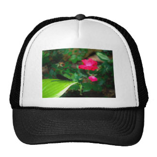 Damselfly and Rose Hats
