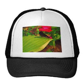 Damselfly and rose trucker hats