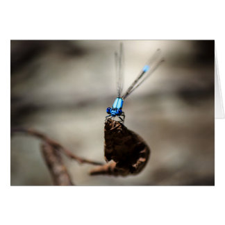 Damselfly Card