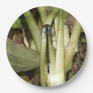 Damselfly, Paper Plates. Paper Plate