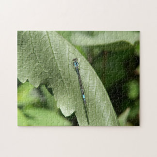 Damselfly, Photo Puzzle. Jigsaw Puzzle