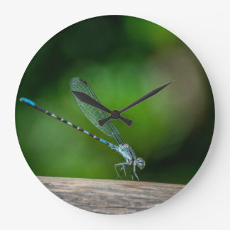 Damselfly Relaxing on a log Large Clock