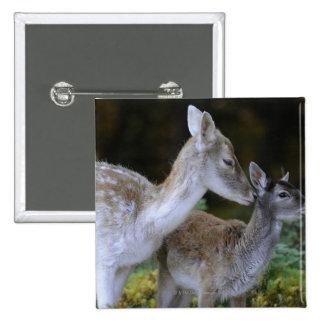 Damwild, Dama dama, fallow deer, Hirschkalb 2 Inch Square Button