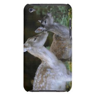 Damwild, Dama dama, fallow deer, Hirschkalb iPod Case-Mate Cases