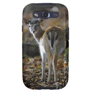 Damwild, Dama dama, fallow deer, Hirschkalb Galaxy SIII Case
