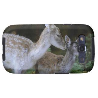 Damwild, Dama dama, fallow deer, Hirschkalb Samsung Galaxy SIII Cases