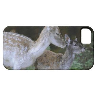 Damwild, Dama dama, fallow deer, Hirschkalb iPhone 5 Cases