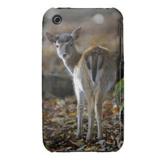 Damwild, Dama dama, fallow deer, Hirschkalb Case-Mate iPhone 3 Cases