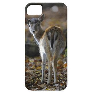 Damwild, Dama dama, fallow deer, Hirschkalb iPhone 5 Cover