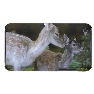 Damwild, Dama dama, fallow deer, Hirschkalb iPod Touch Covers