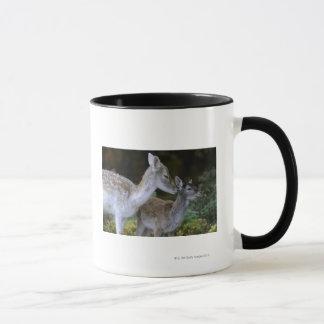 Damwild, Dama dama, fallow deer, Hirschkalb Mug