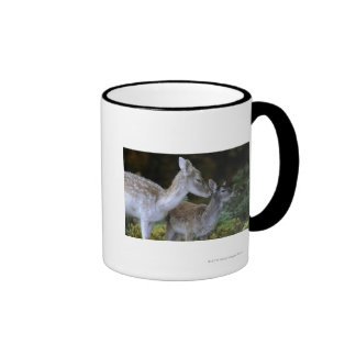 Damwild, Dama dama, fallow deer, Hirschkalb Ringer Coffee Mug