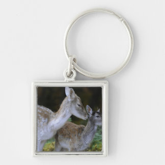 Damwild, Dama dama, fallow deer, Hirschkalb Silver-Colored Square Keychain