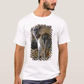 Damwild, Dama dama, fallow deer, Hirschkalb T-Shirt