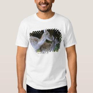 Damwild, Dama dama, fallow deer, Hirschkalb Tee Shirt