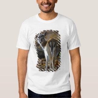Damwild, Dama dama, fallow deer, Hirschkalb Tshirt