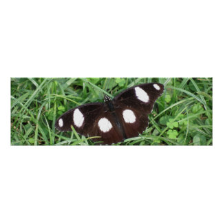 Danaid Egg Fly Poster