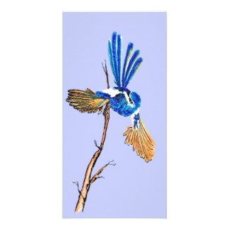 Dancing Blue Fairy Wren Australian Bird Print Customized Photo Card