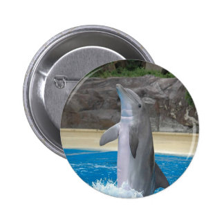 Dancing Dolphin Button