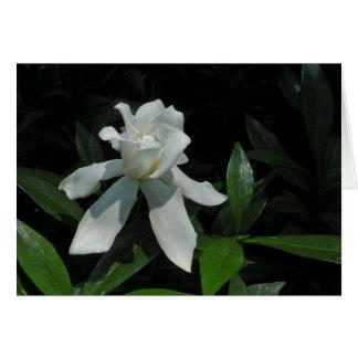 Dancing Gardenia Note Card