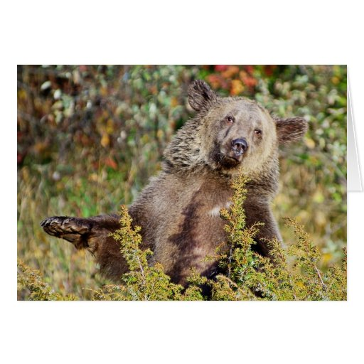 Dancing Grizzly Bear Card