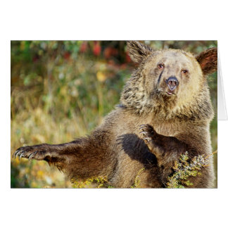 Dancing Grizzly Bear Cards