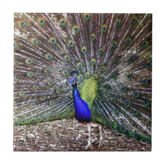 Dancing Peacock Ceramic Tile