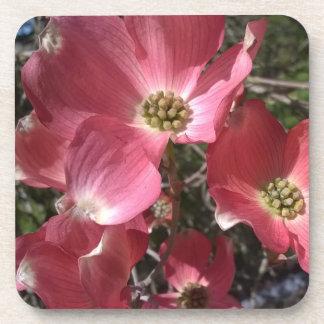 Dancing Pink Dogwood Coaster