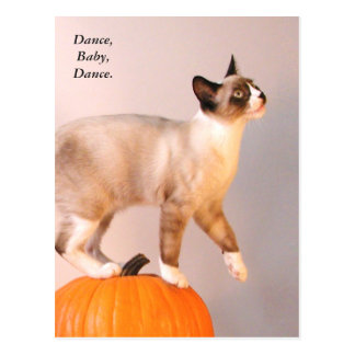 Dancing Siamese Cat on Pumpkin Humorous Funny Postcard