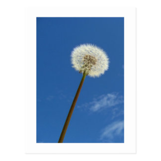 Dandelion against the Blue Sky - Postcard