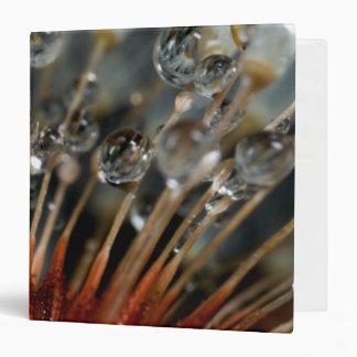Dandelion and water drops, CA 3 Ring Binder