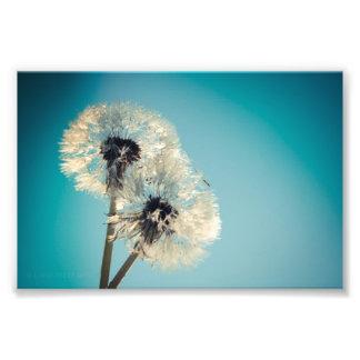 Dandelion Blue Sky Photo