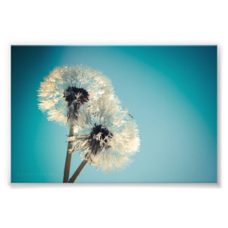 Dandelion Blue Sky Photo Print