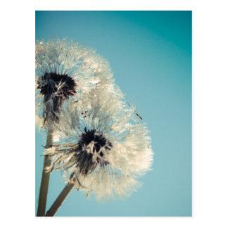 Dandelion Blue Sky Postcard