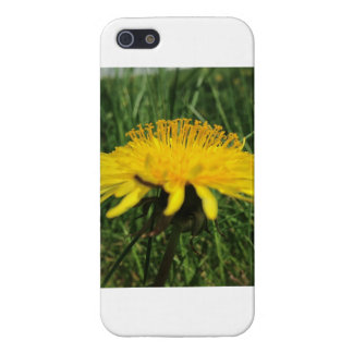 Dandelion Case For iPhone 5/5S