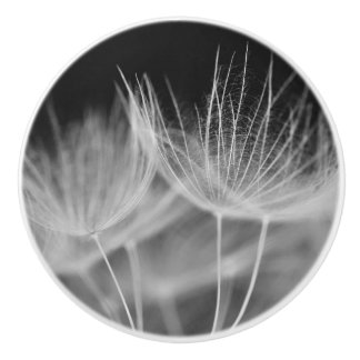 Dandelion Closeup in Black White Ceramic Knob