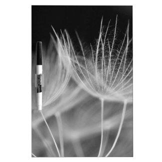 Dandelion Closeup in Black White Dry Erase Board