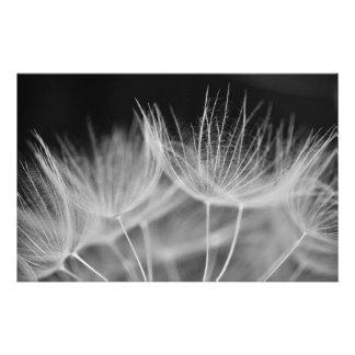 Dandelion Closeup in Black White Stationery