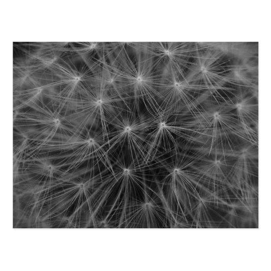 Dandelion Constellation Postcard
