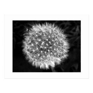 Dandelion Fuzz Postcard