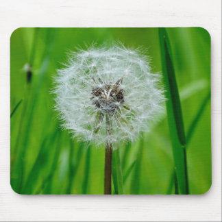 Dandelion in the Fresh Green Grass - Mousepad