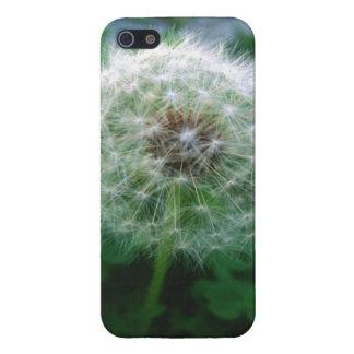 dandelion in the garden iPhone 5 cover